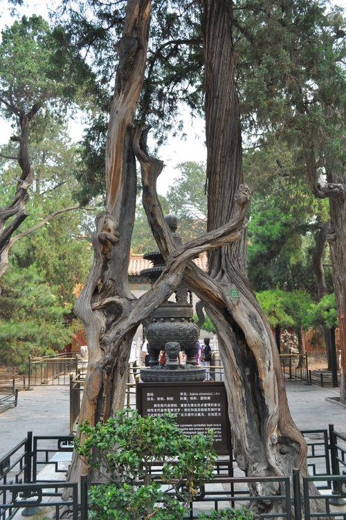 Leglobeflyer reportages et tourisme dans le monde entier for Jardin imperial