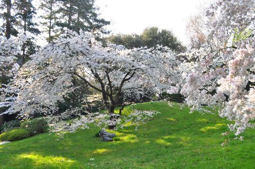 Leglobeflyer reportages et tourisme dans le monde entier - Les jardins albert kahn ...